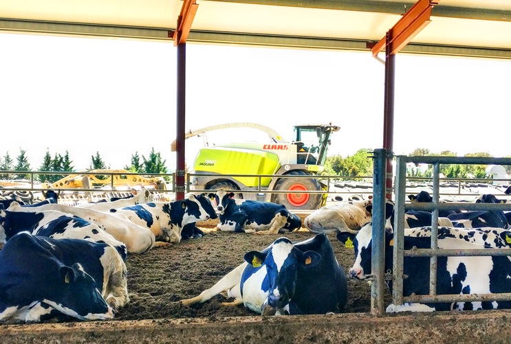 Environmental control: Preparing your herd against Bovine Mastitis during lactation.