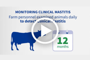 Is vaccination key in the control of <em>Strep. uberis</em> mastitis? A proven field experience in The Netherlands