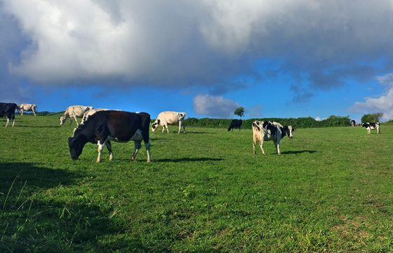 Farms free of Mastitis in cattle