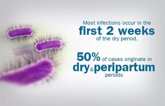 coliform-mastitis-infographics-S