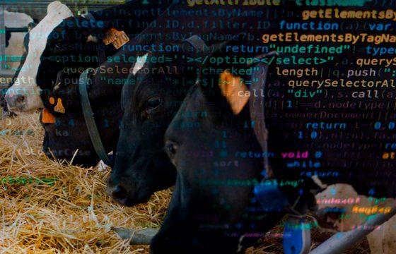 data-analysis-bovine-mastitis5-B