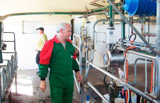 mastitis-dairy-farm